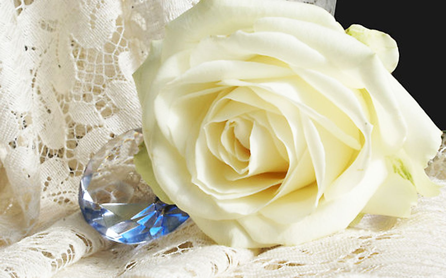 Pin By Wallpapers Hd Desktop On White Color Purity White Roses Wallpaper White Roses White Flower Wallpaper