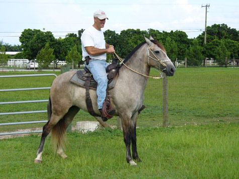 Florida Cracker Horse Association Florida Horses Florida Cracker