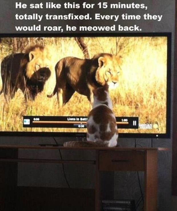 New Funny Cute Funny Animal Picdump of The Day 192 (24 Photos) - humorside Funny Animal Picdump of The Day 192 (24 Photos) 3