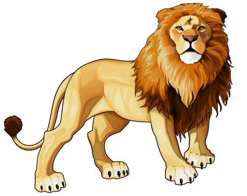 png web clipart rh pinterest co uk clipart lioness head clipart lines and bars