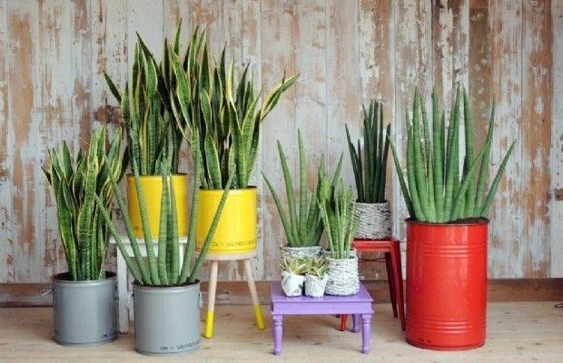 piante-in-appartamento.jpg (620×400)