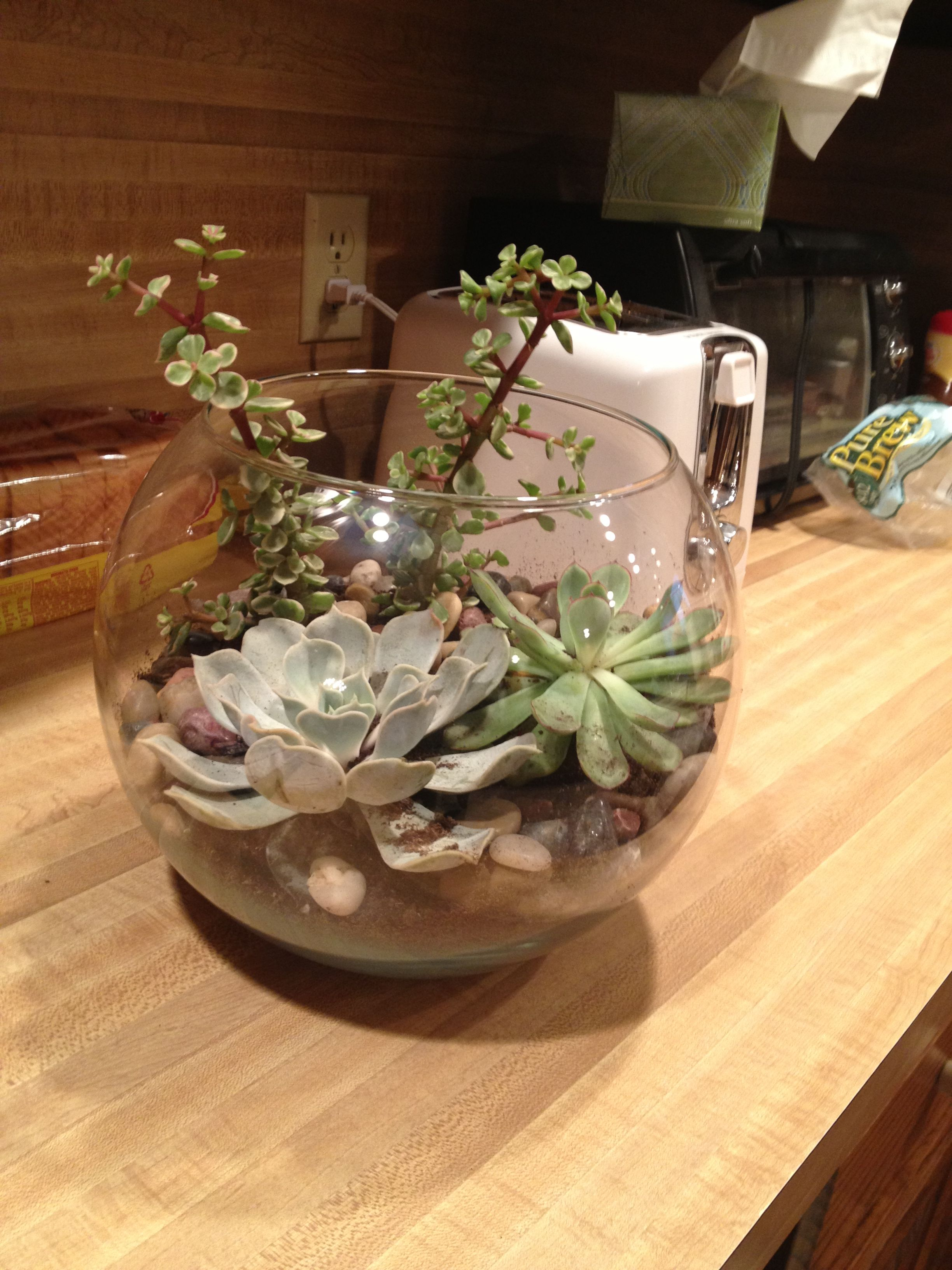 I made a terrarium! the plants were about $3.50 at lowes, got a bag ...