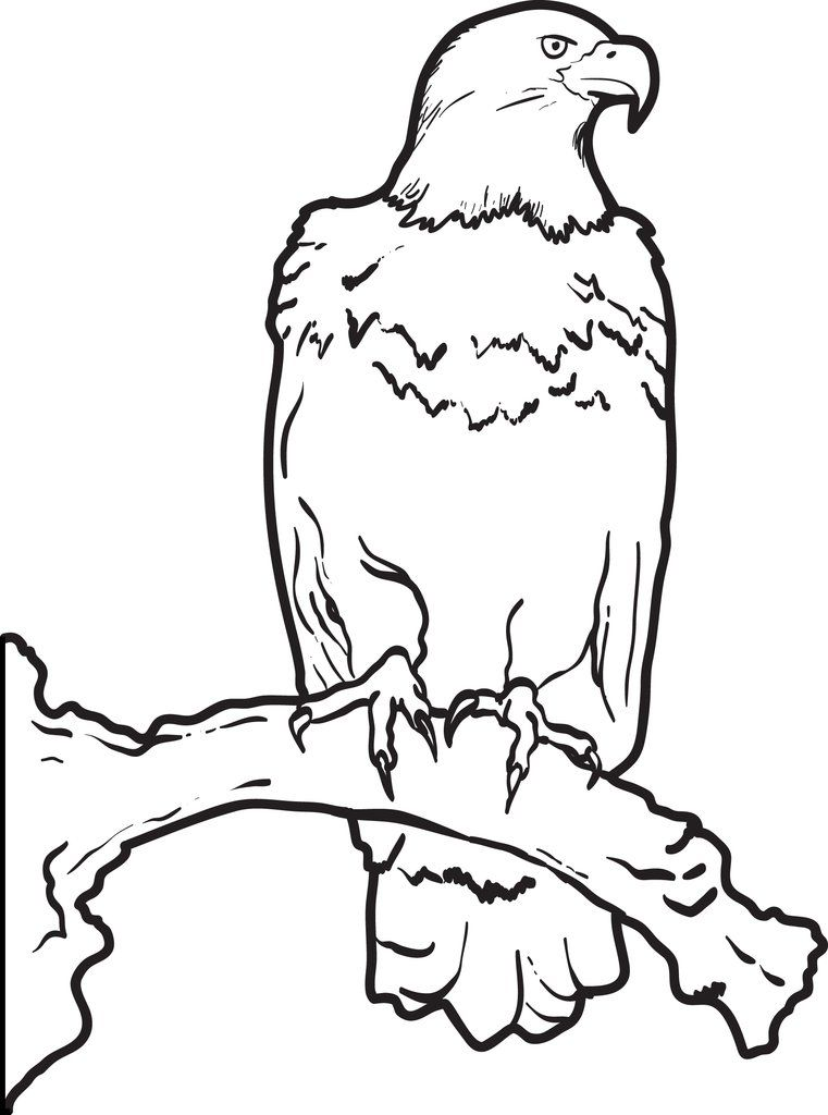 Bald Eagle Coloring Page   Bear coloring pages, Coloring ...