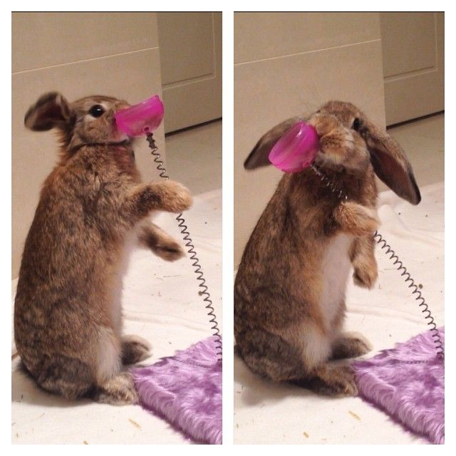 Bunny Bopper Toy From Little Paws Rescue In Perth Wa Bunnytoys Toocute Toys Playtime Paws Rescue