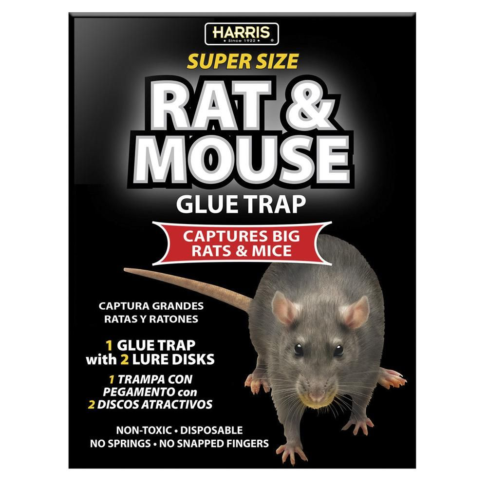 Harris Rat And Mouse Glue Trap Super Size With Lure Blkrat 1 Mouse Glue Trap Glue Traps Rats
