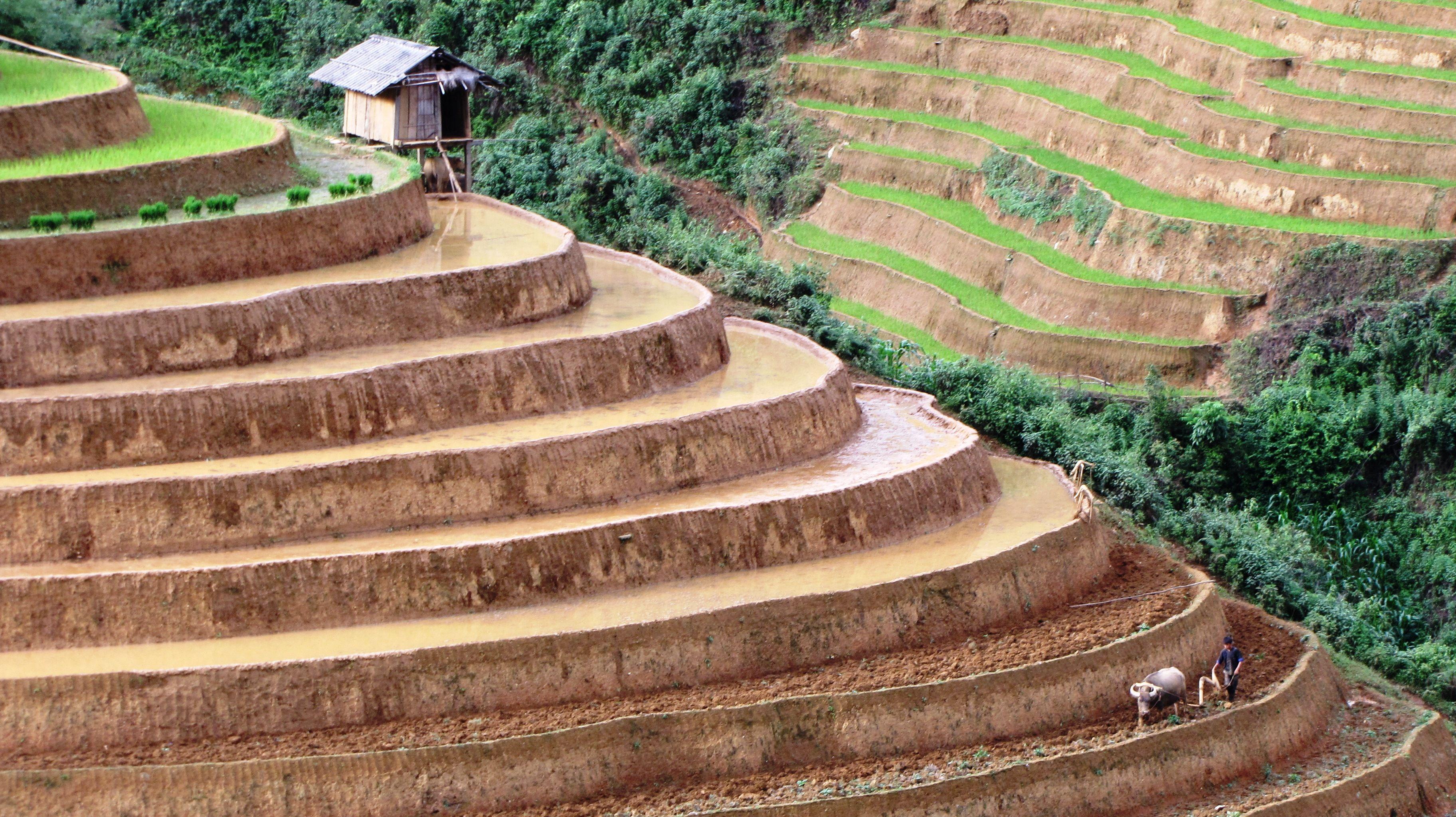 Terraces in Mu Cang Chai - Yen Bai - Vietnam