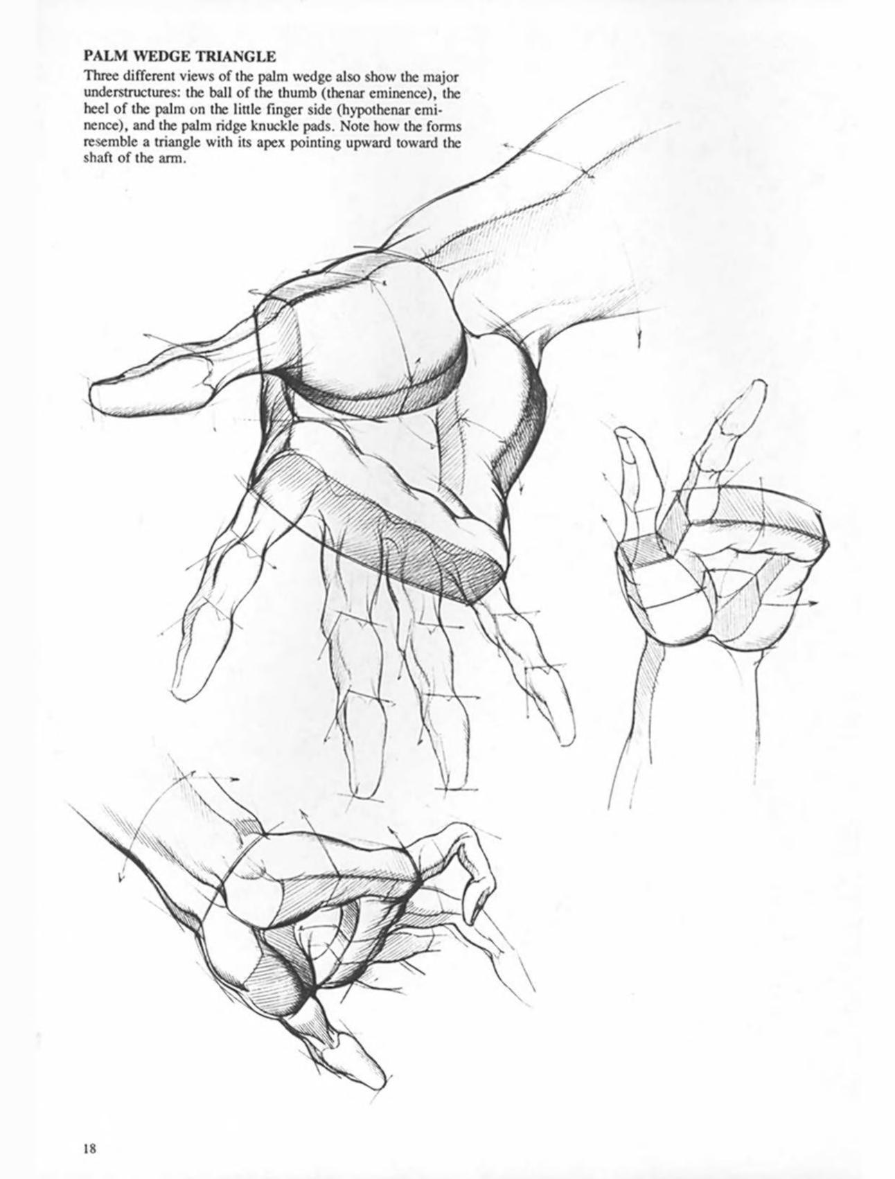 Burne Hogarth Drawing Dynamic Hands Drawings Humanoid Sketch Art