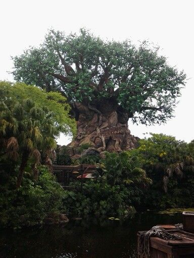 Tree of Life -Disney Animal Kingdom