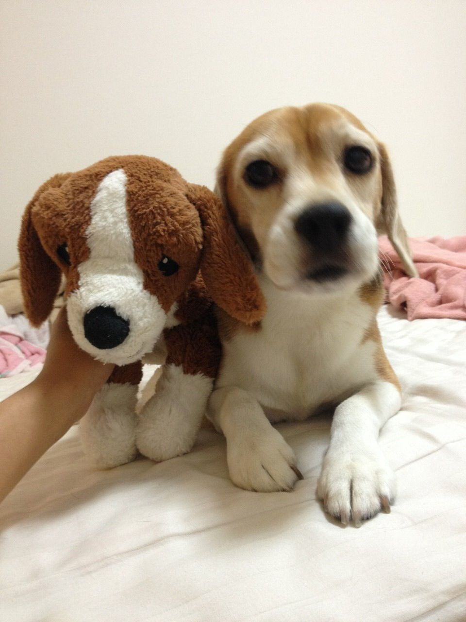 With His Little Bro Ikea Beagle Doggy