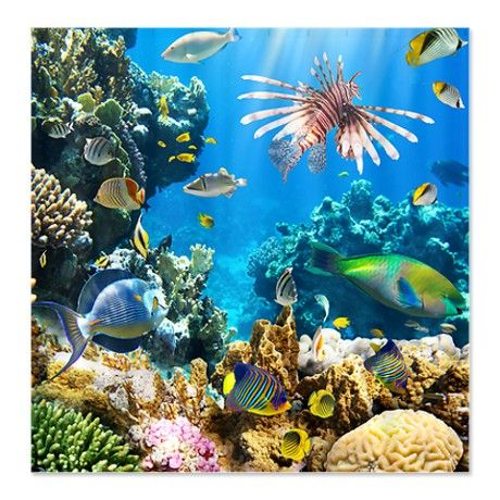 Sea Life Shower Curtain By Daecu Underwater Wallpaper Tropical