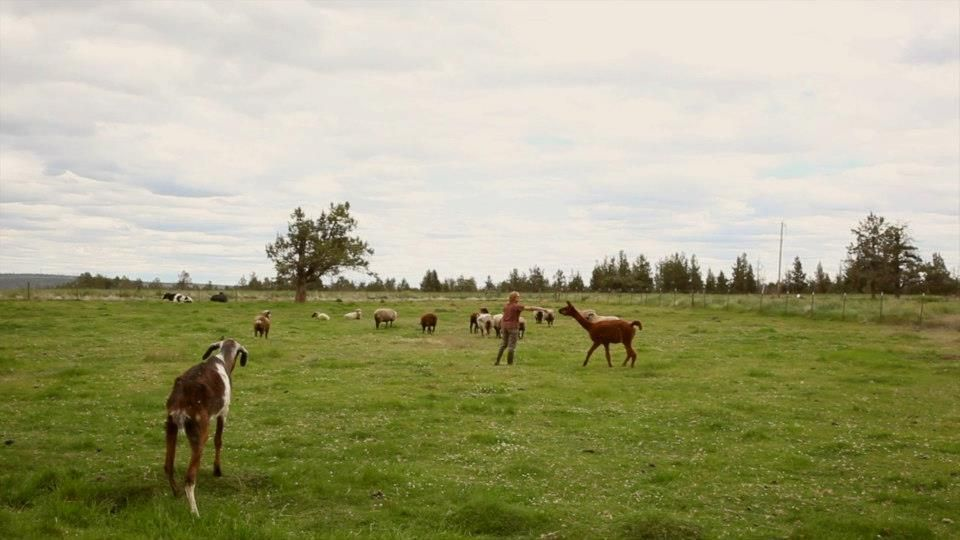 Sustainable farming in Central Oregon