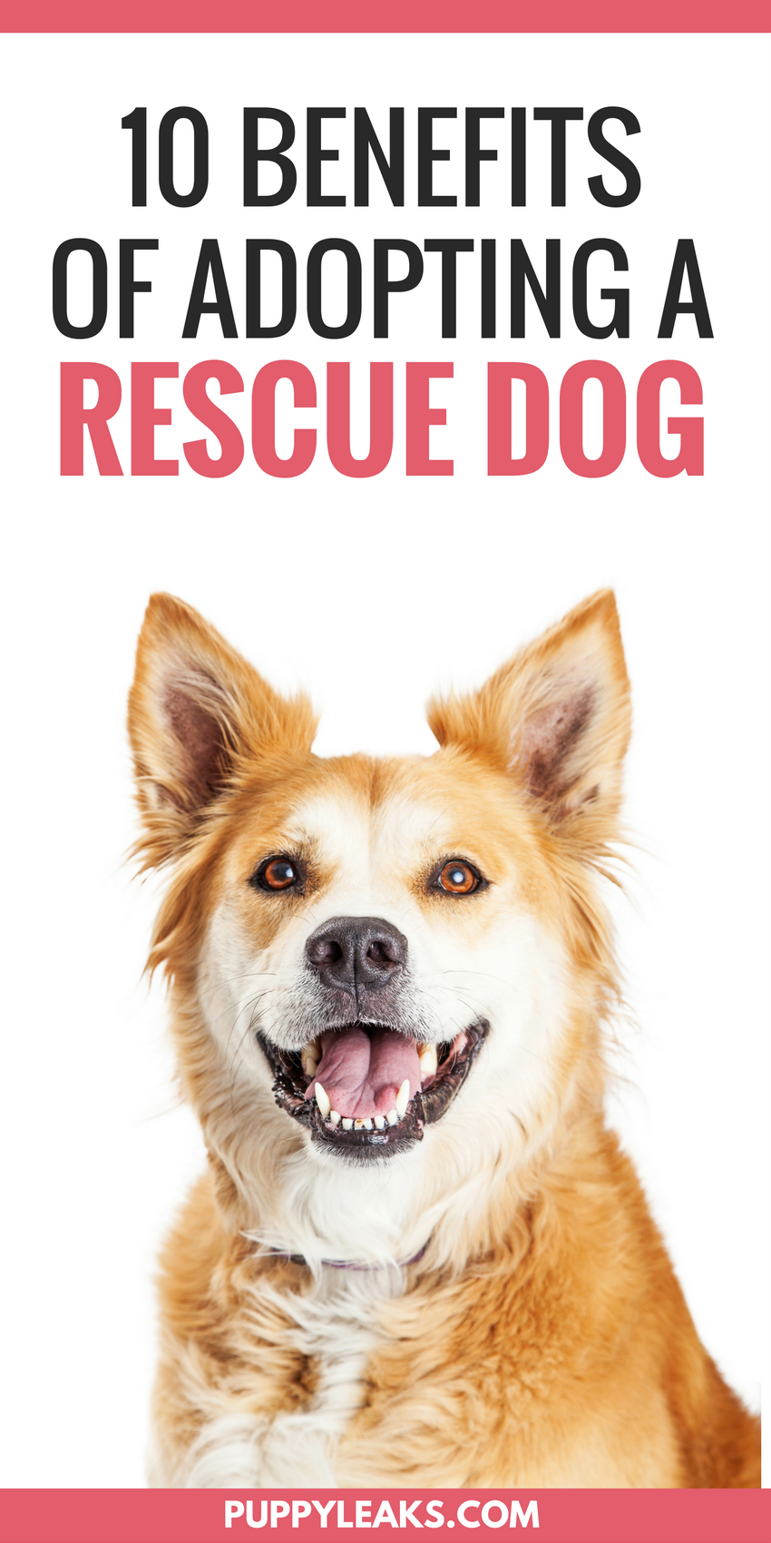 10 Benefits of Adopting a Rescue Dog Best dog toys