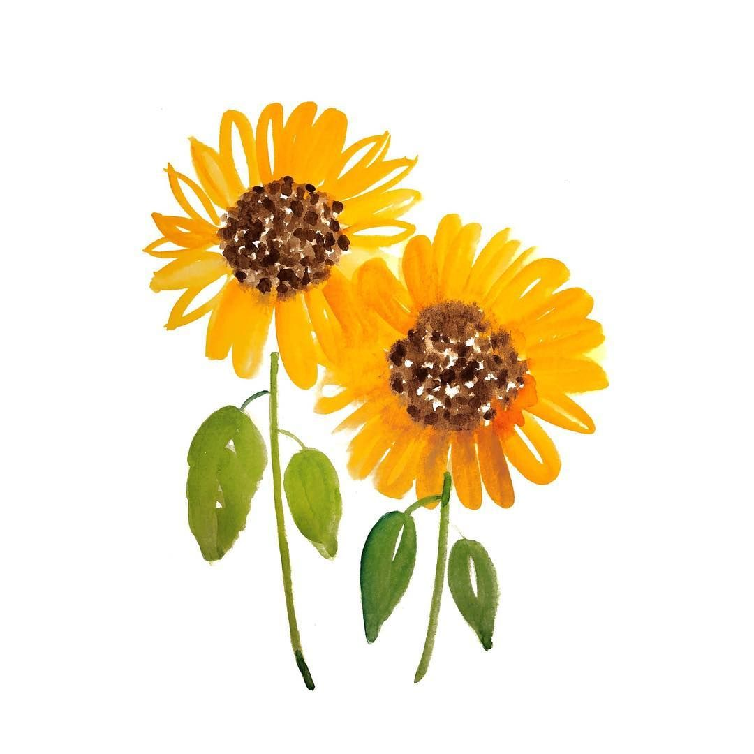 Watercolor Floral 18 30 Sunflowers Sunflower Illustration Sunflower Art Watercolor Flowers Paintings
