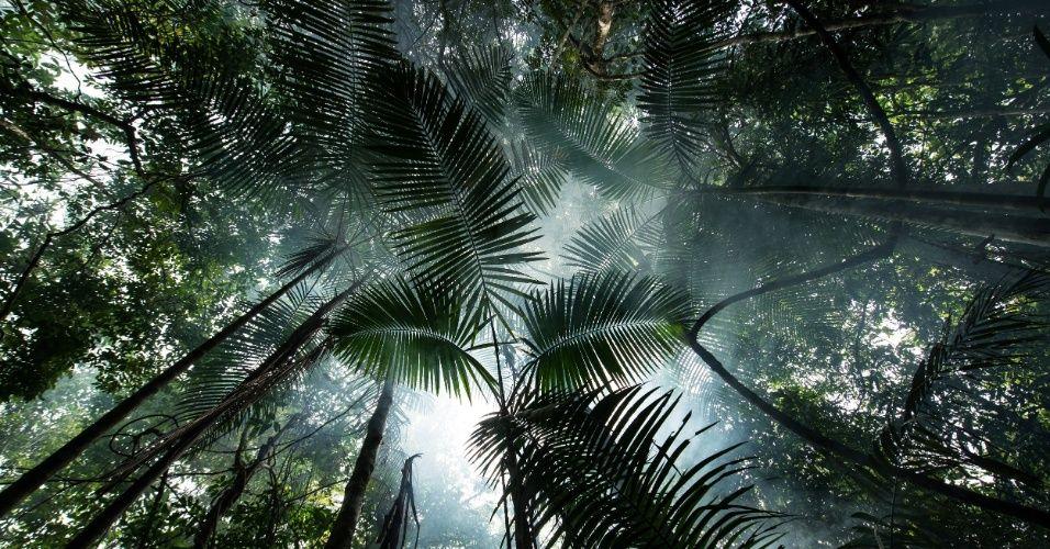 Floresta próxima ao rio Tapajós, na região da Terra Indígena Sawré Muybu, do povo Munduruku, no Pará. O governo brasileiro planeja construir 43 grandes hidrelétricas na bacia do Tapajós