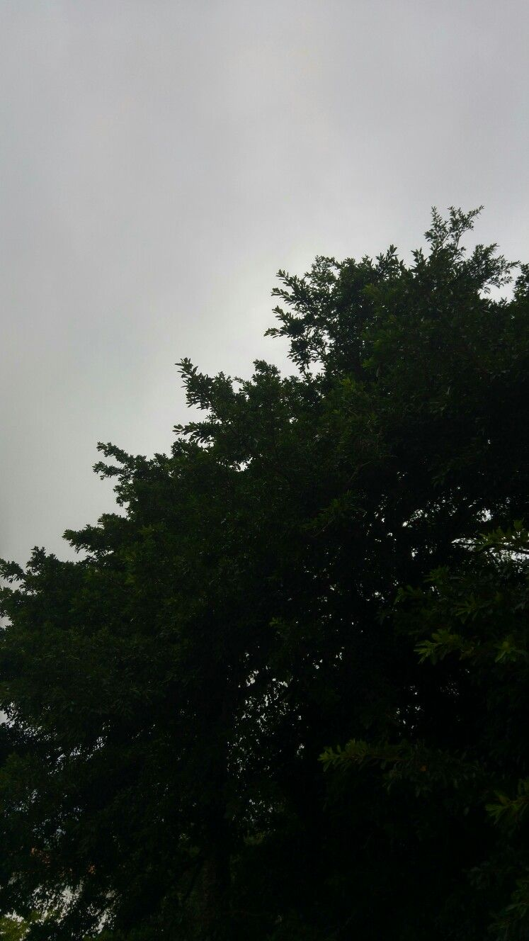 Green tree + Cloudy sky