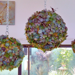 "succulent orb forms. $79.99 for 20"" orb"