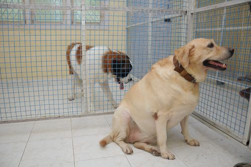 Pet Hostel Dog Sitter Near Me Cheap Pet Insurance Dog Dental