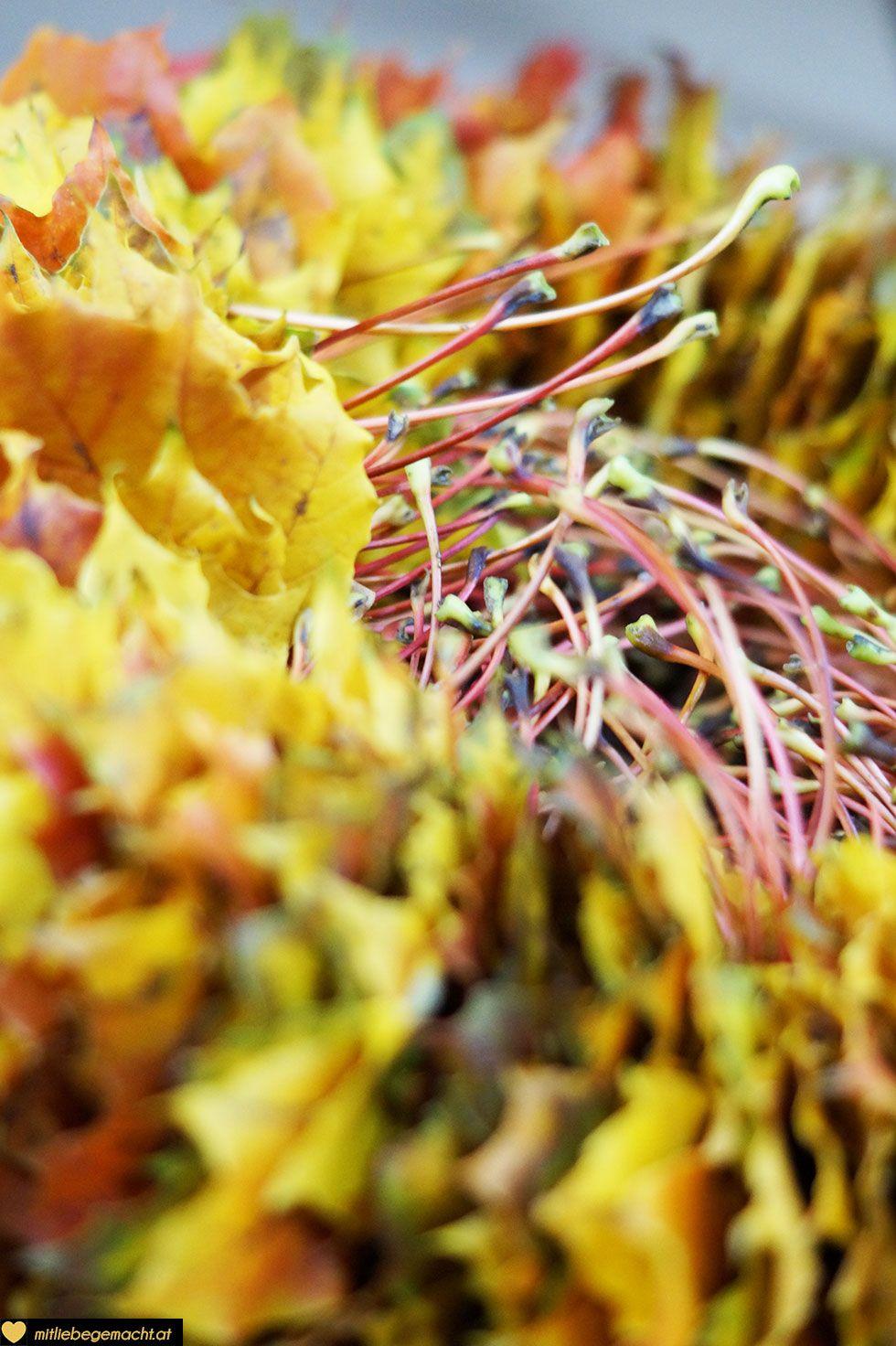 Herbstkranz aus Blätter - Blätterkranz selber machen