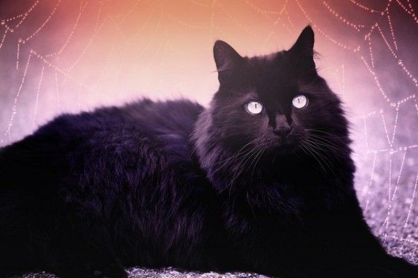 Porque se diz que os gatos pretos dão azar