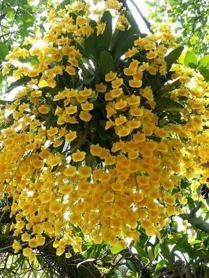 Flores e frases: ORQUIDEA by johnnie