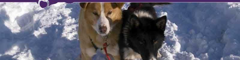 Paws for Adventure, Fairbanks, Alaska, Sled Dog Mushing, Aurora, Northern Lights