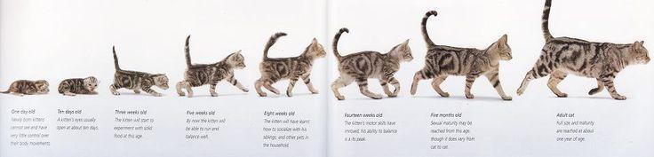 At What Age Do Kittens Start Eating Kitten Food 2021