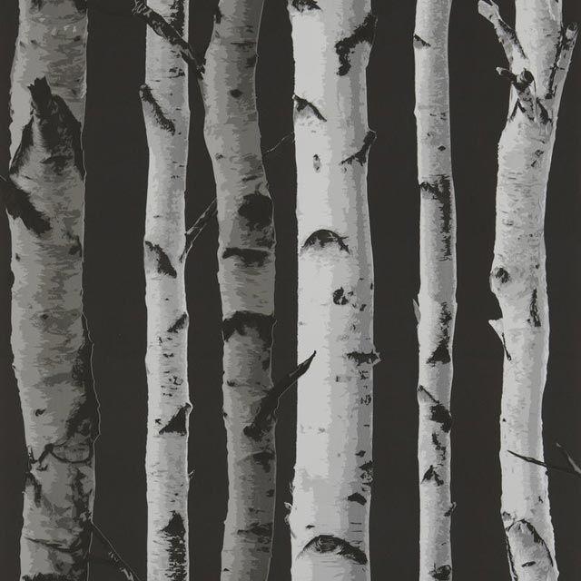 Papier peint bouleau fond noir castorama papierpeint for Papier peint a peindre castorama