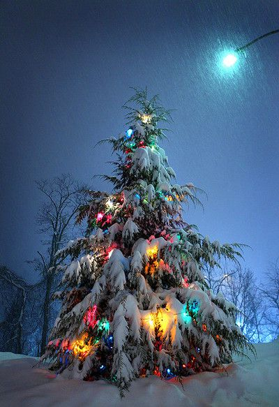 This Is My Fave Thing About The Holidays I Can Be Entranced By A Pine Tree All Lit Up In Snow For Hours