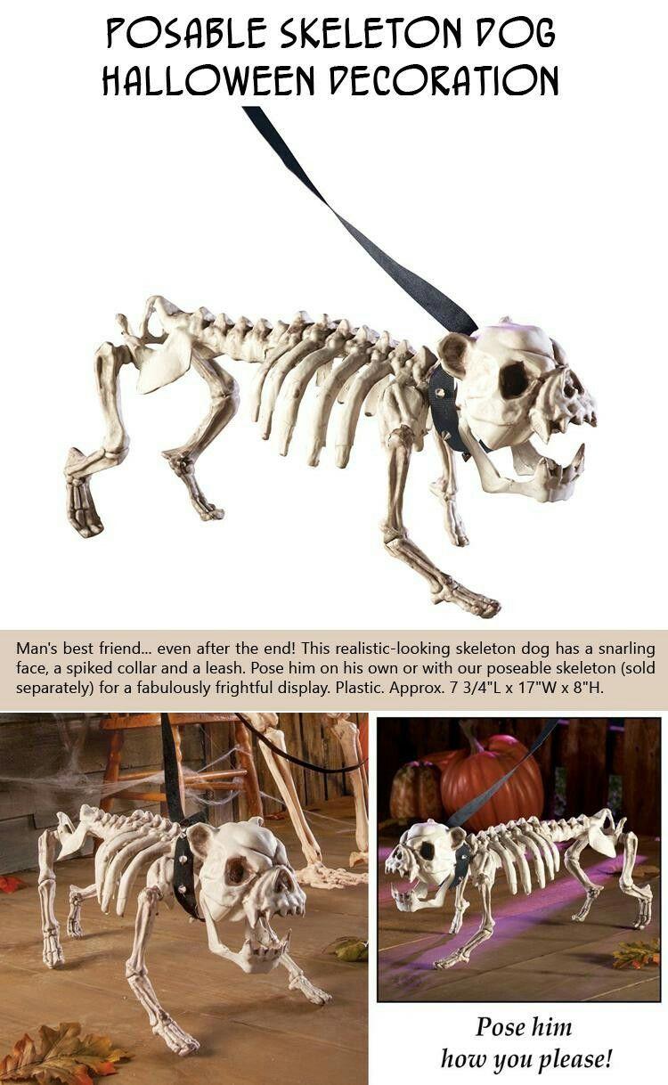 explore dog halloween halloween stuff and more