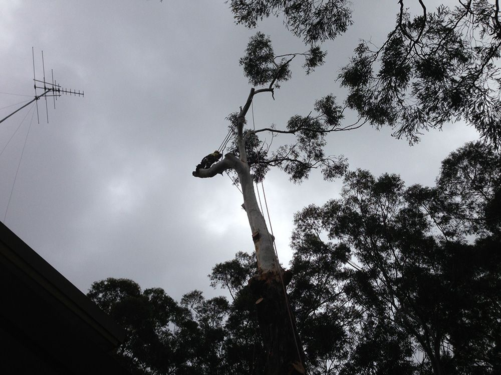 Treemendous Tree Care work is of high safety standards on