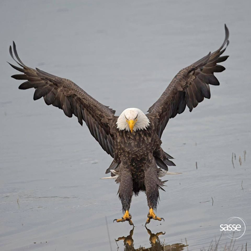 The Eagle Has Landed Quote: The Moment Of Almost Touchdown -looks Like He's Landing On