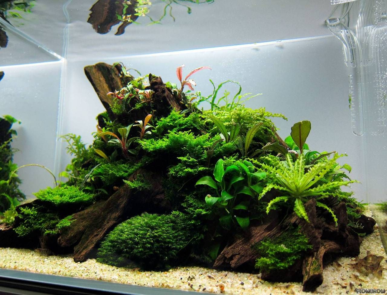 Simon S Aquascape Blog Island Style Nice Composition Fish Tank