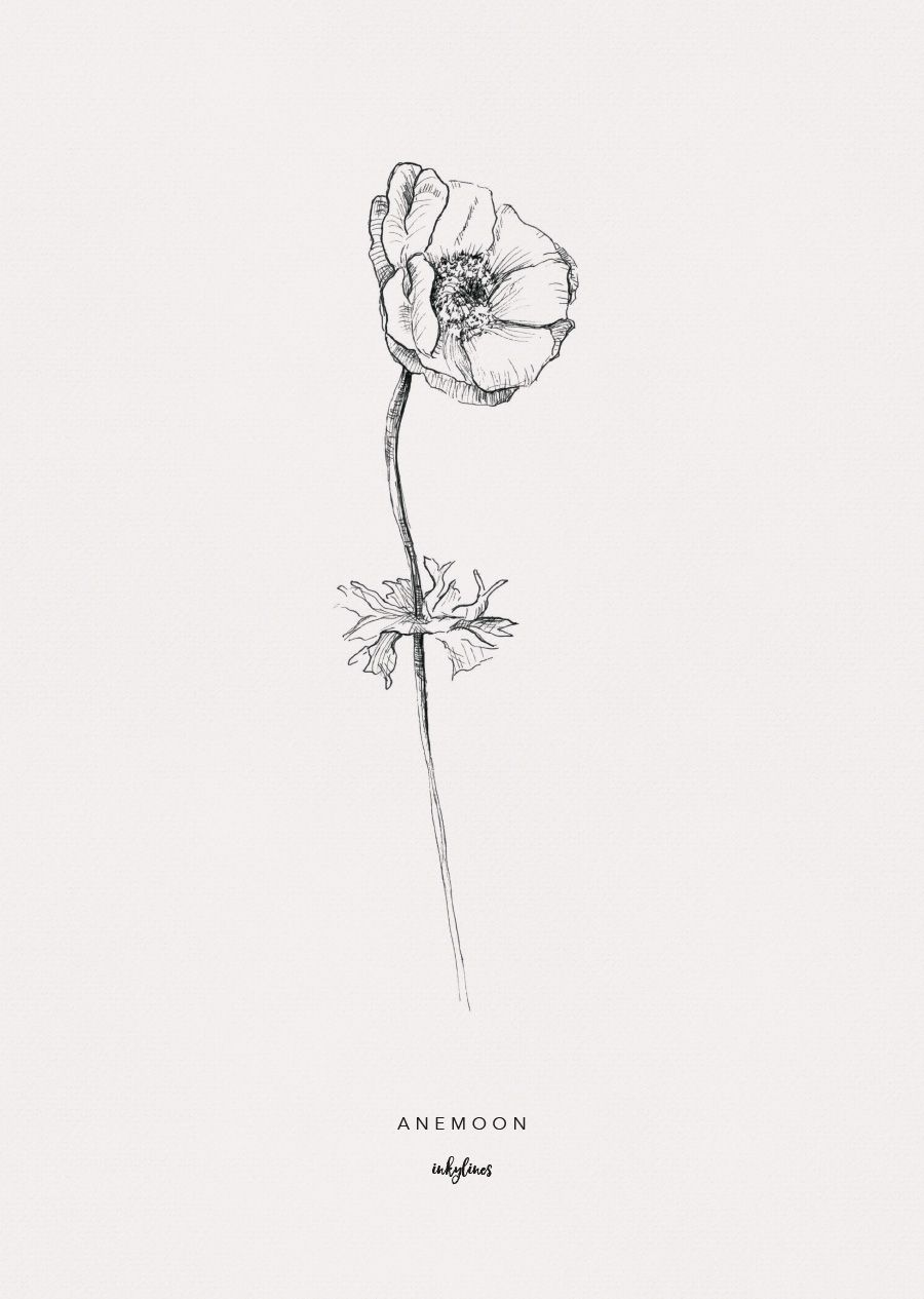 Printables Anemone Pencil Drawings Of Flowers Botanical Art Prints Fineliner Art