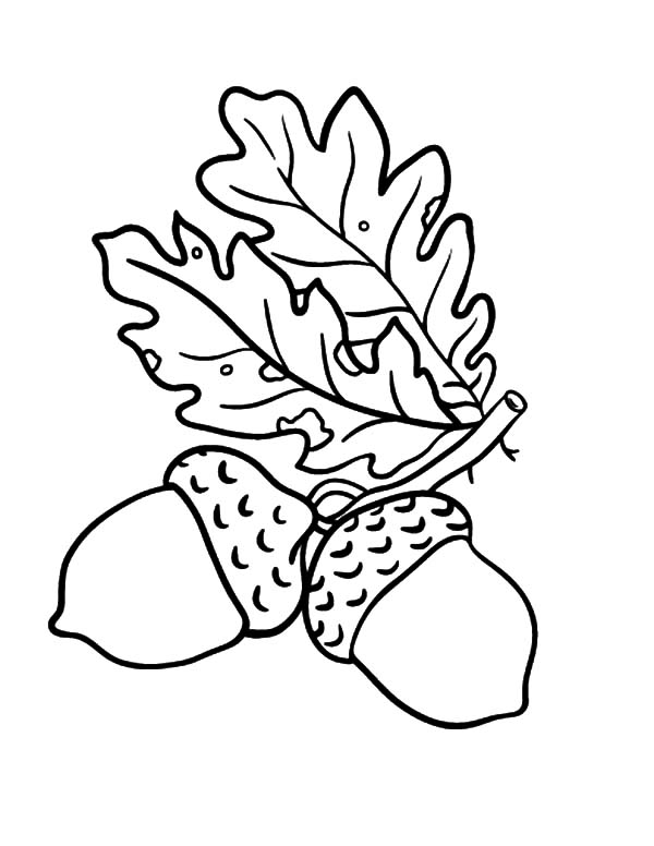 Oak Leaves Acorn Coloring Pages Coloring Sky Leaf Coloring Page Oak Leaf Tattoos Acorn Drawing