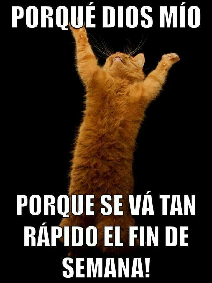 Pin By Claudia Dominguez On Cruzando El Atlantico Cats Cat Memes Cat Person