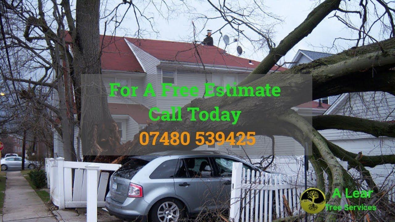 24 hour tree surgeon nottinghamshire stump removal root