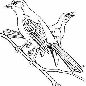 Robin Northern Mockingbird Coloring Page