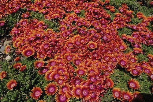 plante grasse rustique