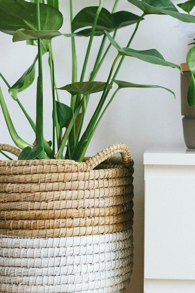 Grote (tropische) plant(en) in de badkamer. Pot in mand. - Project ...