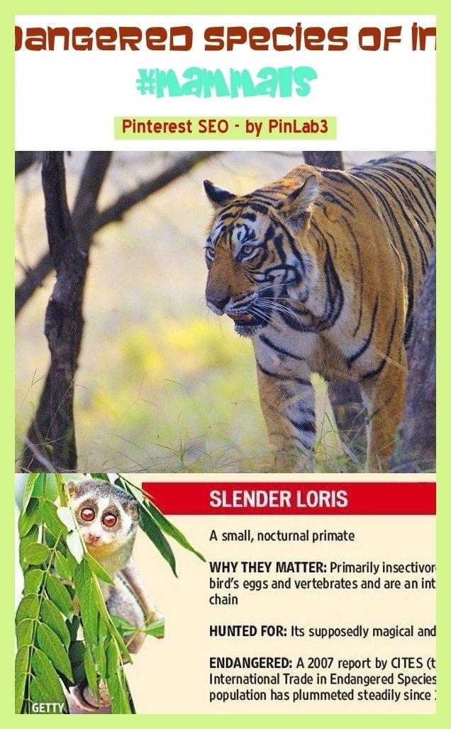 Endangered species of india mammals animals. endangered