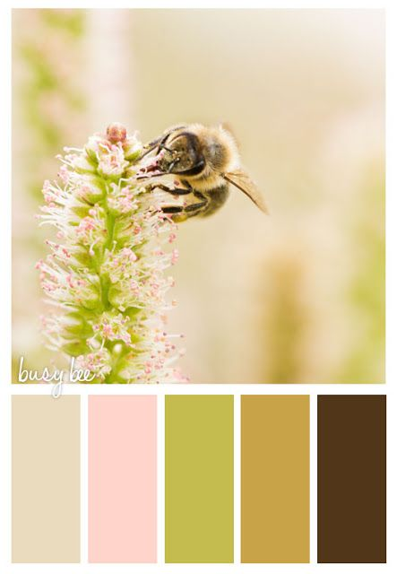 tan pink green brown