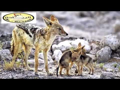 قناة الريادة 10 حيوانات لديهم ألوان غريبة و عجيبة لن تصدق أنهم موجود Animals Kangaroo