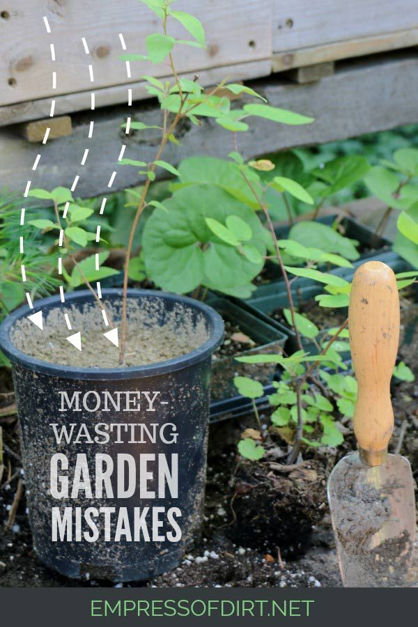 10 Garden Mistakes That Waste Money Home Vegetable Garden
