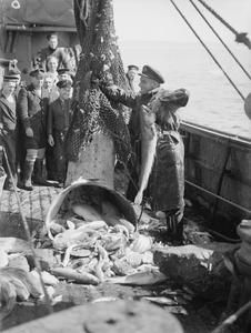 MINESWEEPER MEN GO FISHING. 4 AND 5 MAY 1942, ON BOARD HMT OHM. THE MEN OF HMT OHM COMBINE THE PERILOUS JOB OF MINESWEEPING WITH THEIR PEACETIME OCCUPATION OF FISHERMEN. SERIES SHOWS THE MEN IN BOTH CAPACITIES, GATHERING FISH AND ATTACKING U-BOATS.
