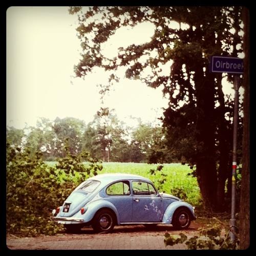 I Ll Drive A Vw Beetle Beetle Vw Beetles Vw Bug