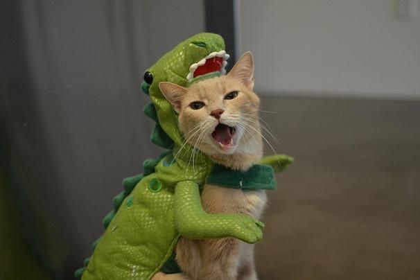 cat costume for cats - Google Search : cat dinosaur costume  - Germanpascual.Com