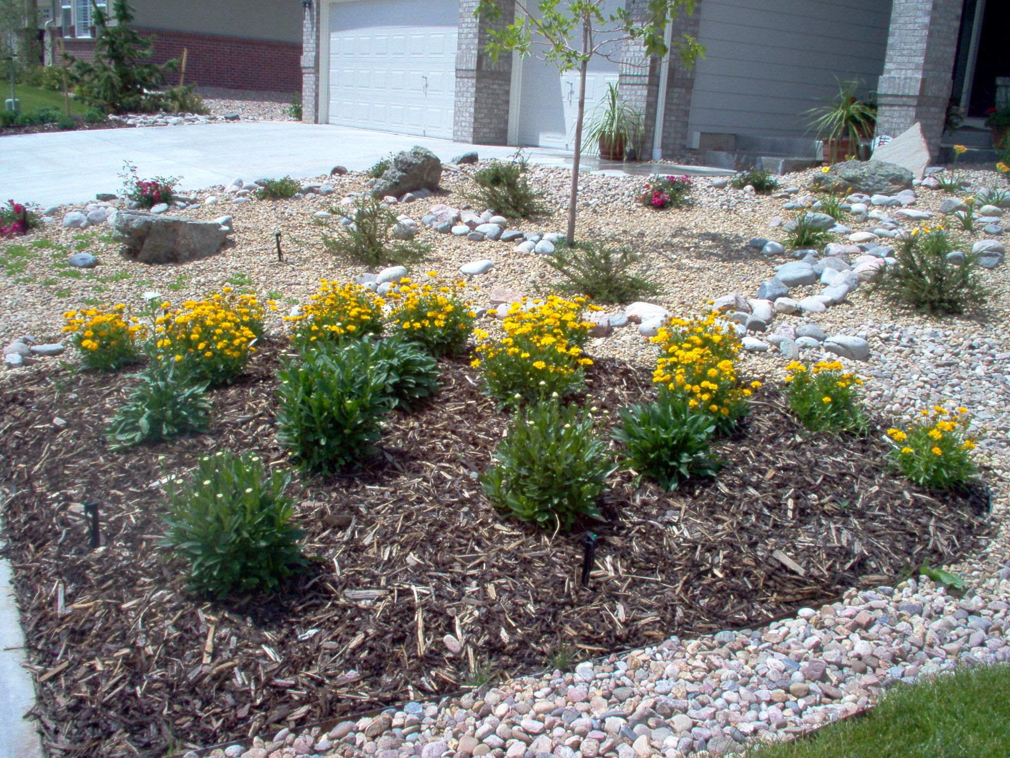 landscaping ideas ravishing xeriscape ideas front lawn. Black Bedroom Furniture Sets. Home Design Ideas