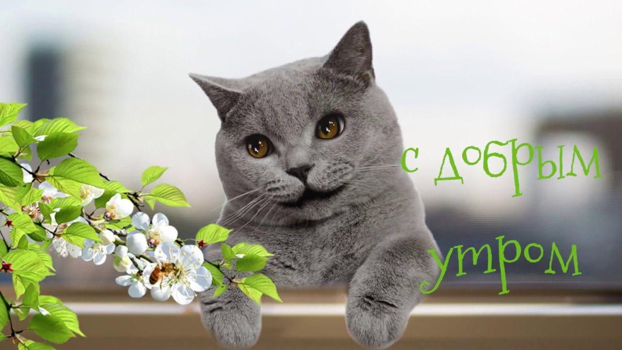 правило, доброе утро и хорошее настроение картинки от кота ночь