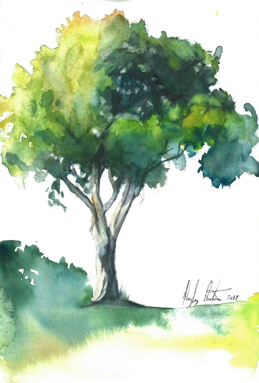 Mango Tree By Hayley Rutger Watercolor Trees Tree Sketches
