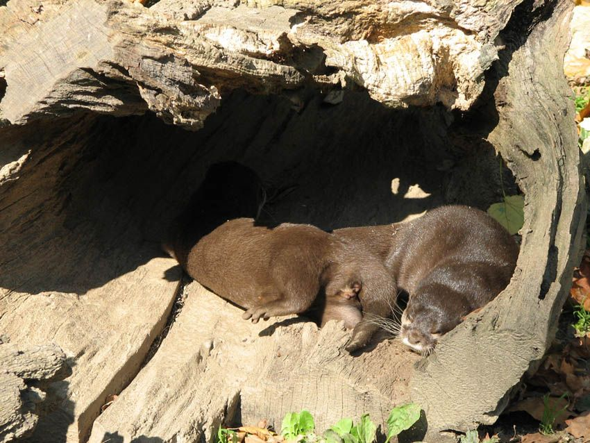 Photo By Mmalcevic Nature Animals Otters Animals